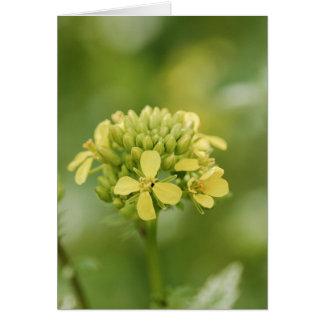 Cartão Planta da mostarda