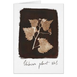 Cartão Planta desconhecida #1