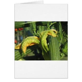 Cartão Planta do abobrinha na flor no jardim vegetal