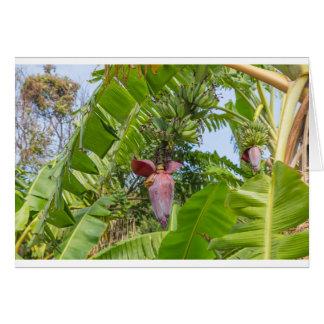 Cartão Plantação de banana na ilha macilento de Sok Kwu