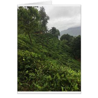Cartão Plantação de chá