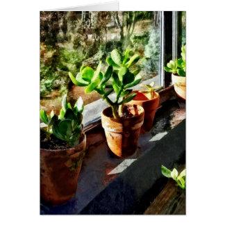 Cartão Plantas do jade na estufa