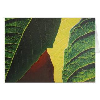 Cartão Poinsétia