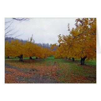 Cartão Pomar de maçãs colorido