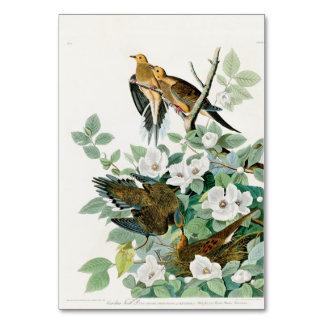 Cartão Pomba da tartaruga de Carolina, pássaros de
