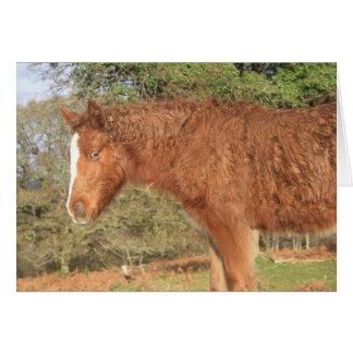 Cartão Pônei de Dartmoor