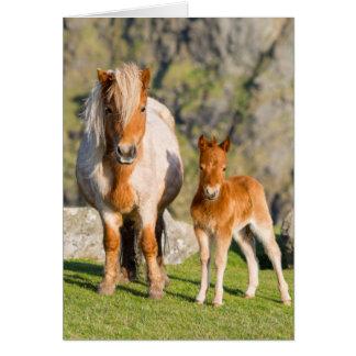 Cartão Pônei de Shetland no pasto perto dos penhascos