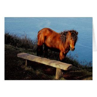 Cartão Pônei sul de Dartmoor da costa de Devon perto do