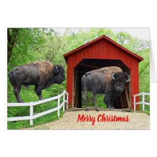 Cartão Ponte coberta vermelha do búfalo engraçado do