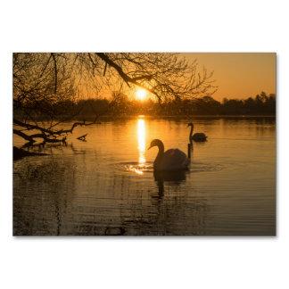 Cartão Por do sol com cisne