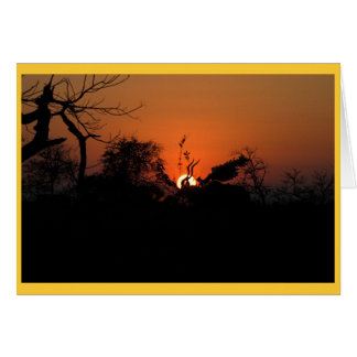 Cartão Por do sol de Kudu