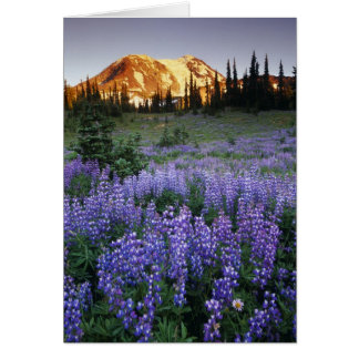 Cartão Por do sol sobre Mt. Adams e um prado