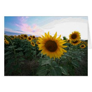 Cartão Por do sol Toscânia Italia do close up dos