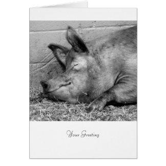 Cartão Porco do sono para todas as ocasiões