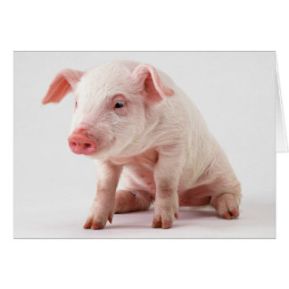 Cartão Porco pequeno