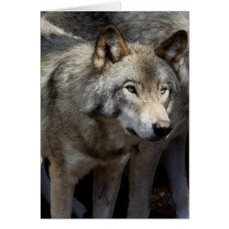 Cartão Posição do lobo cinzento