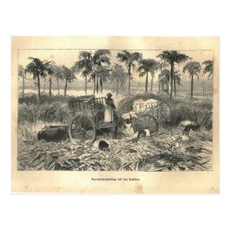 Cartão Postal 1877 impressão Cuba Antilhas, terra e seus povos