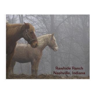 Cartão Postal 20071221_0021_r1, couro cru RanchNashville,