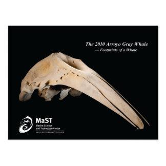 Cartão Postal 2010 a baleia cinzenta do Arroyo - pegadas de uma