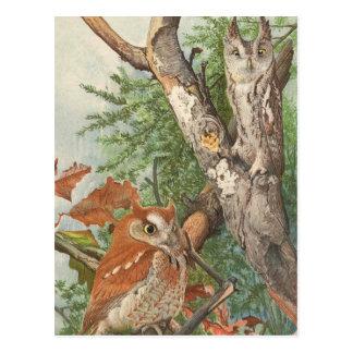 Cartão Postal 2 corujas irritadas do vintage em uma árvore