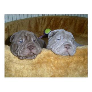 Cartão Postal 2 pei shar puppies.png