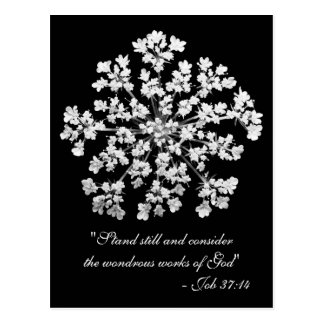 Cartão Postal 37:14 do trabalho do laço da rainha Anne