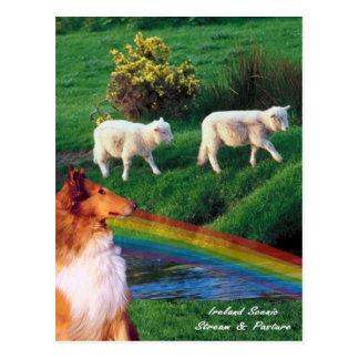 Cartão Postal 4.  Córrego de Ireland com Collie e carneiros