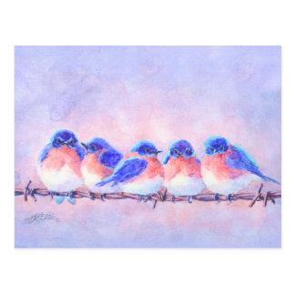 Cartão Postal 5 BLUEBIRDS em um FIO por SHARON SHARPE