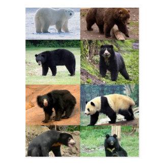 Cartão Postal 8 ursos do mundo