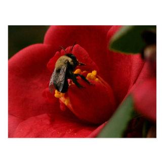 Cartão Postal A abelha come algum almoço