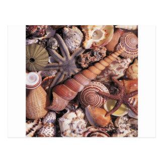 Cartão Postal A água da natureza Assorted descasca a praia