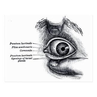 Cartão Postal A anatomia do cinza - globo ocular