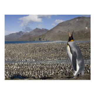 Cartão Postal A Antártica, ilha sul de Geórgia (Reino Unido),