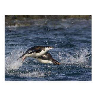 Cartão Postal A Antártica, ilhas de Shetland sul, Gourdon