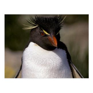 Cartão Postal A Antártica, ilhas Secundário-Antárcticas, 5 sul