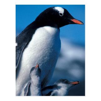 Cartão Postal A Antártica, ilhas Secundário-Antárcticas, sul