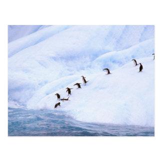 Cartão Postal A Antártica, península antárctica. Chinstrap