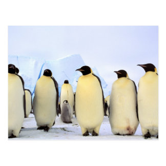 Cartão Postal A Antártica, península antárctica, mar de Weddell,