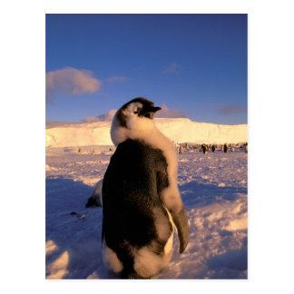 Cartão Postal A Antártica, território antárctico australiano, 2