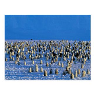 Cartão Postal A Antártica, território antárctico australiano, 5