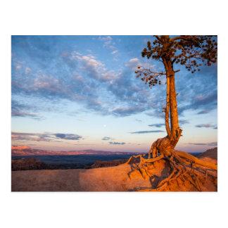 Cartão Postal A árvore adere-se à borda, parque nacional da