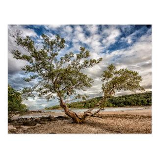 Cartão Postal A árvore dos manguezais