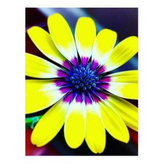 Cartão Postal A beleza de amarelo e do roxo