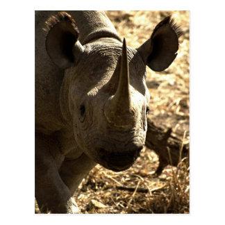 Cartão Postal A cabeça do Rhino