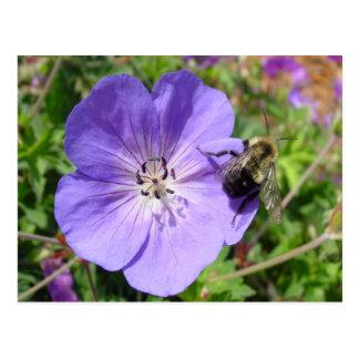 Cartão Postal A câmera tímida Bumble a abelha