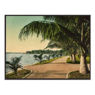 Cartão Postal A caminhada no Palm Beach Photochrom raro