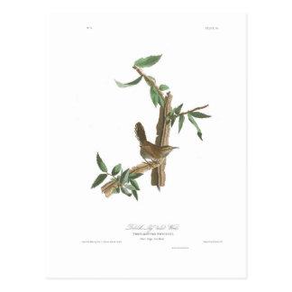 Cartão Postal A carriça de Bewick da placa 18 de Audubon