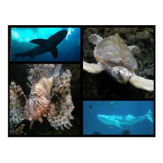 Cartão Postal A colagem do aquário de Geórgia