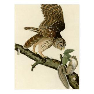 Cartão Postal A coruja barrada de Audubon