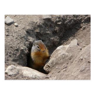 Cartão Postal A criatura do roedor emerge